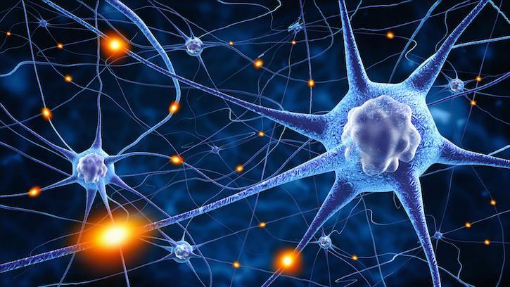 3D model of neurons
