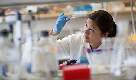 Stephanie Zhao analyzing Petri dish in lab