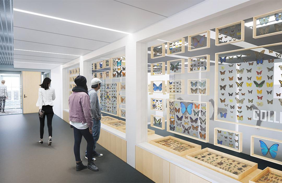 A rendering of a hallway featuring special collections displays in the new Cordley Hall