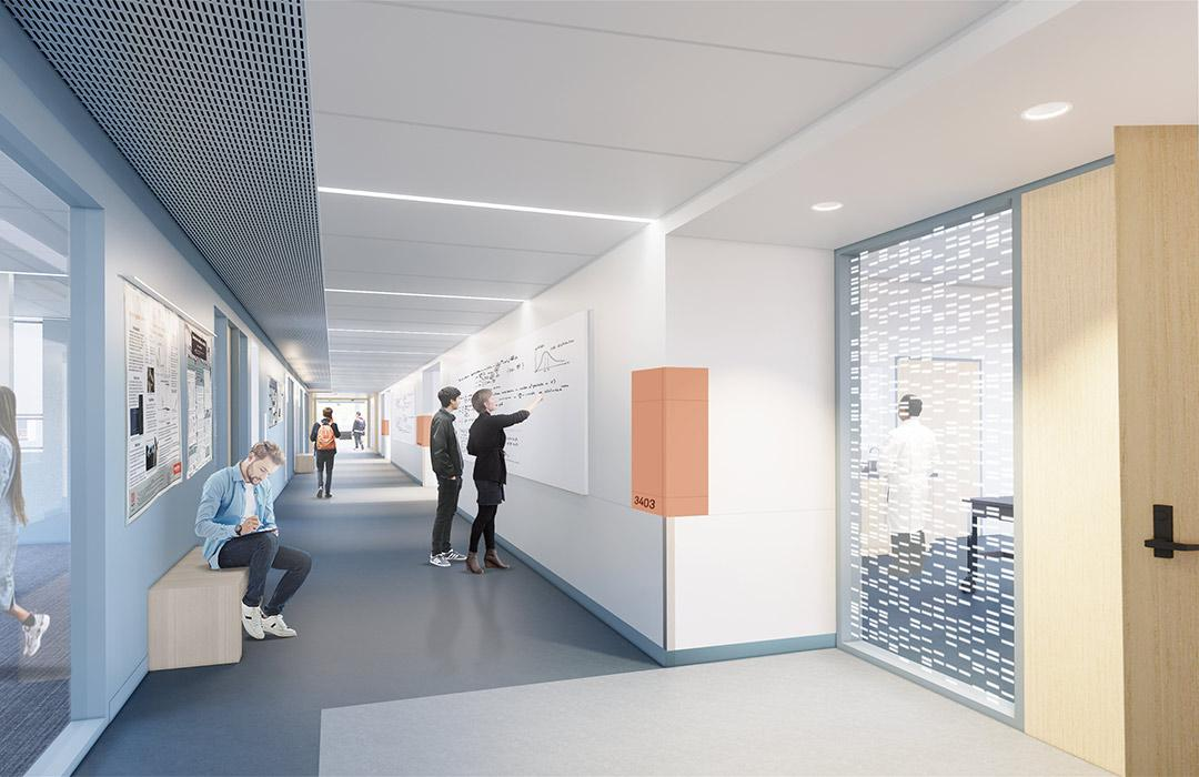 A rendering of a hallway and lab entrance within Cordley Hall