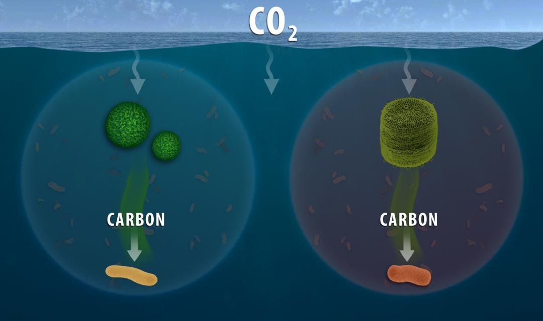 Marine microbes consume different types of organic carbon
