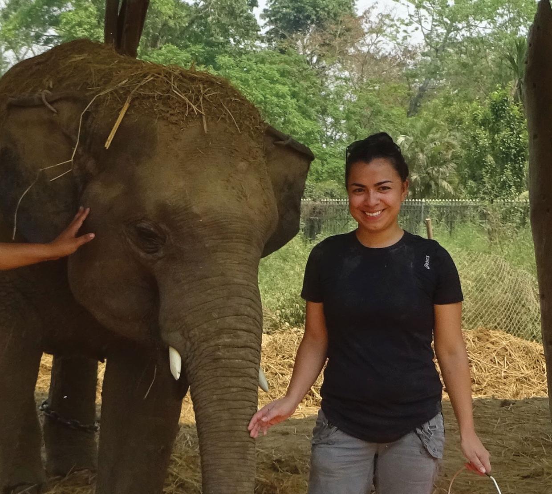Stephanie Rosales feeding an elephant
