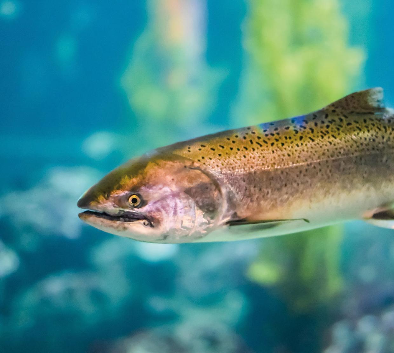 salt water fish swimming in creek