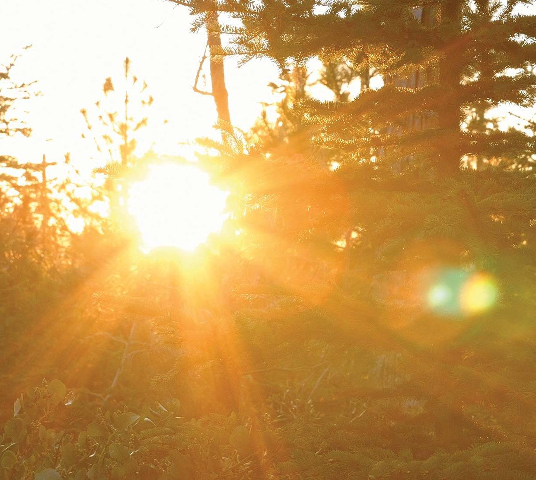 Sunset peering through trees