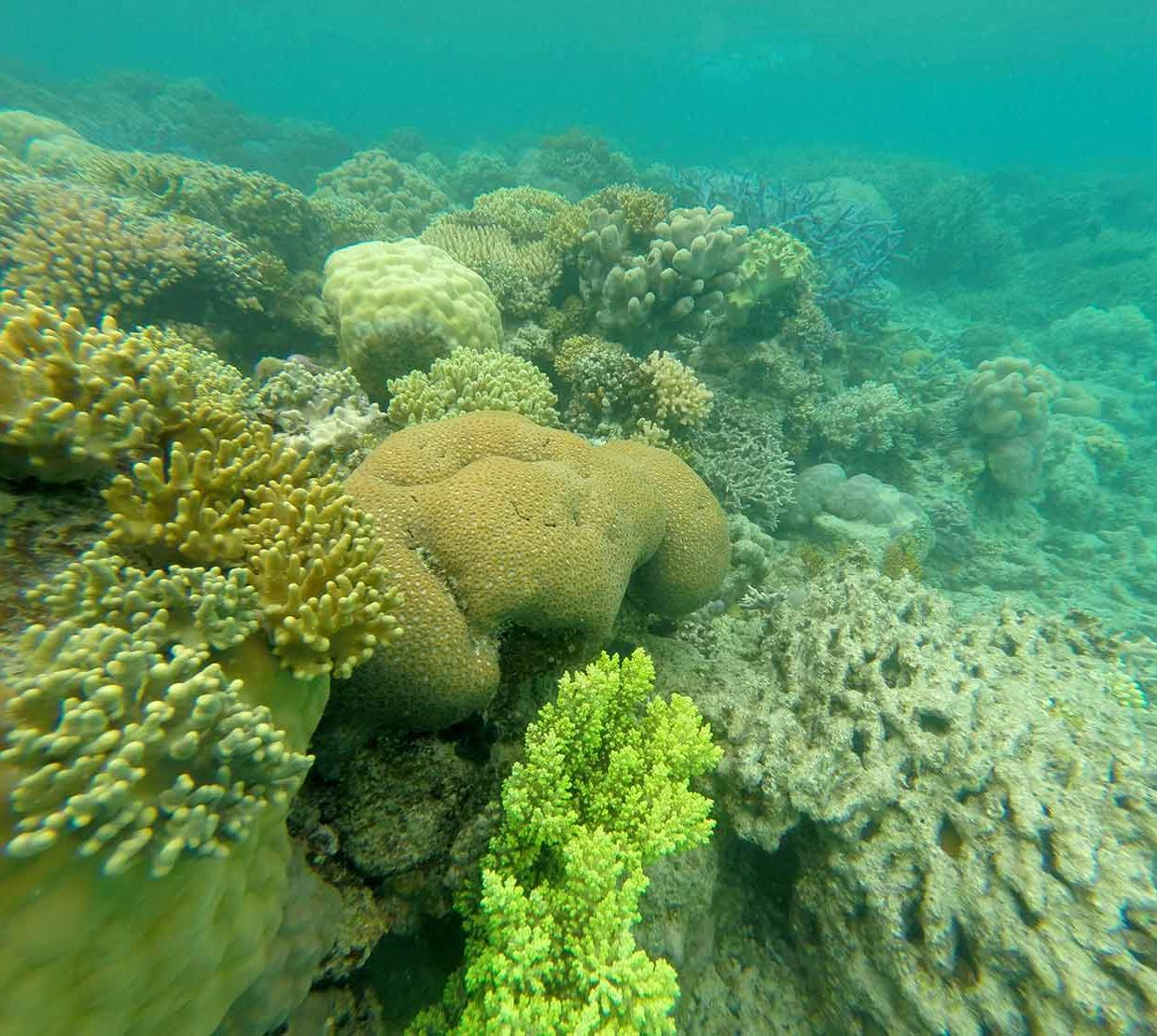 Coral reef sitting on rocks in ocean floor
