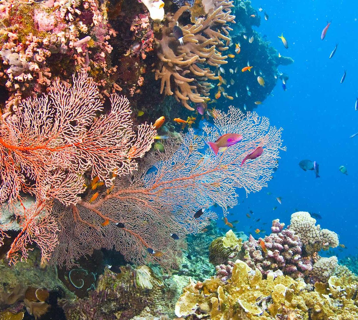 fish and coral in their underwater ecosystem