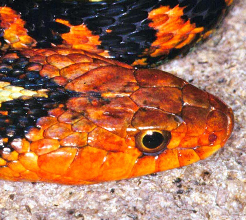 Snake slithering on concrete