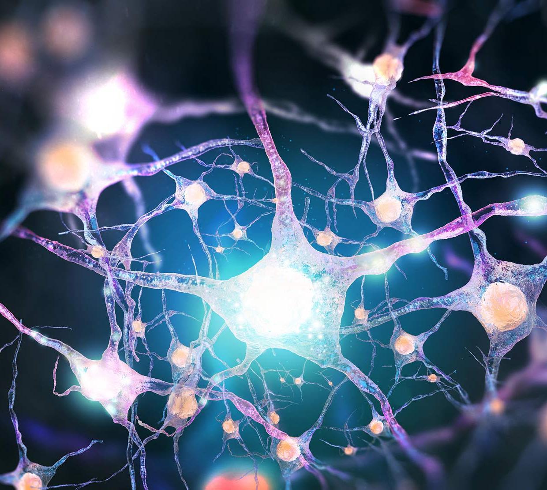 model of nervous system