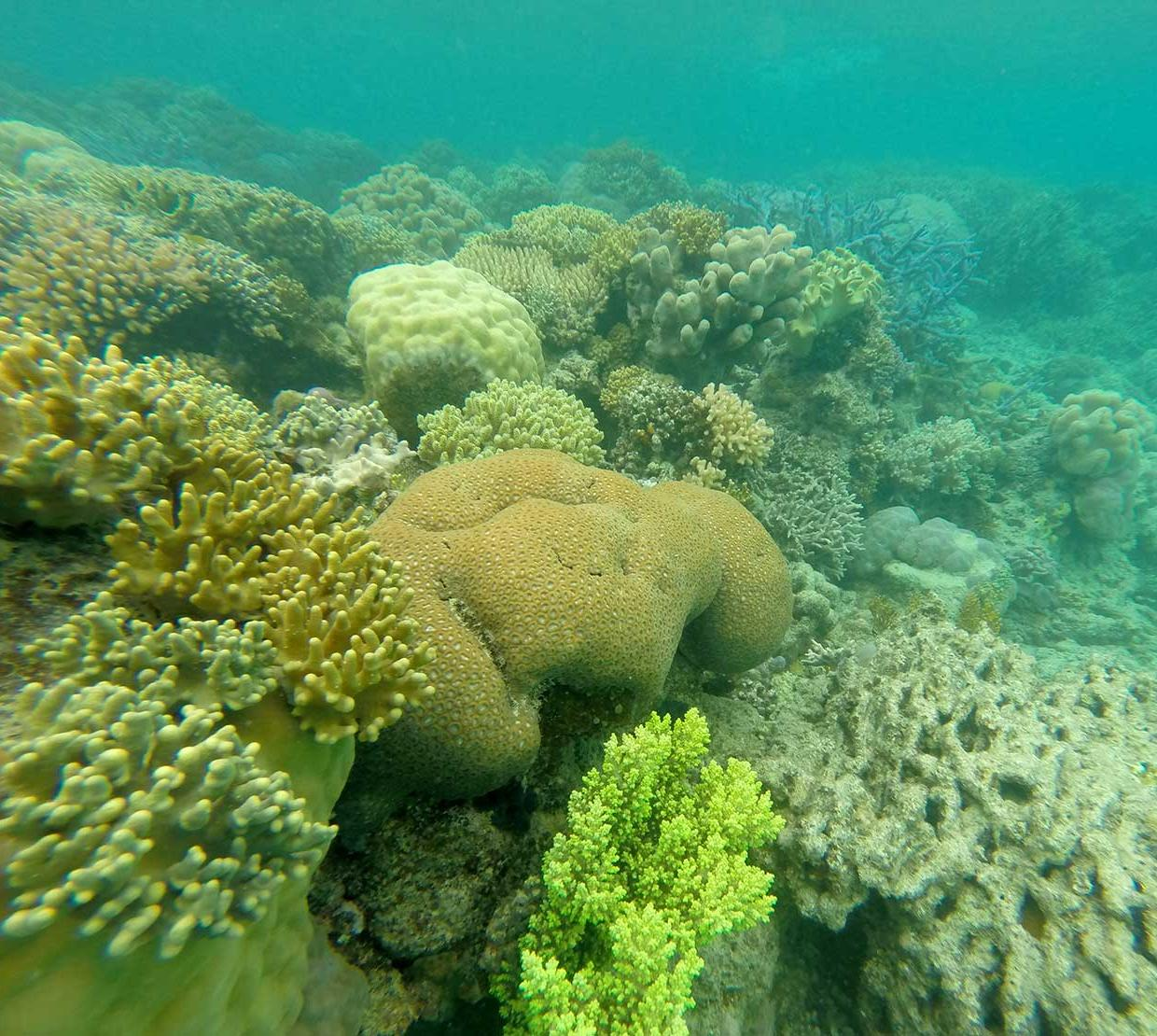Coral in the ocean floor