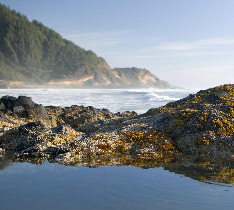 tide pool on Oregon Coast