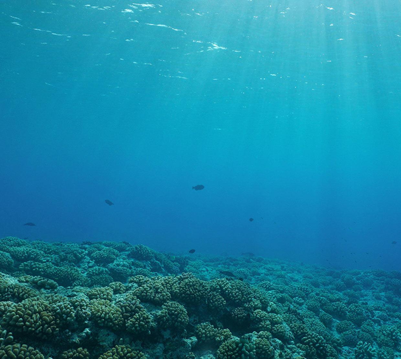 vast amount of coral in ocean
