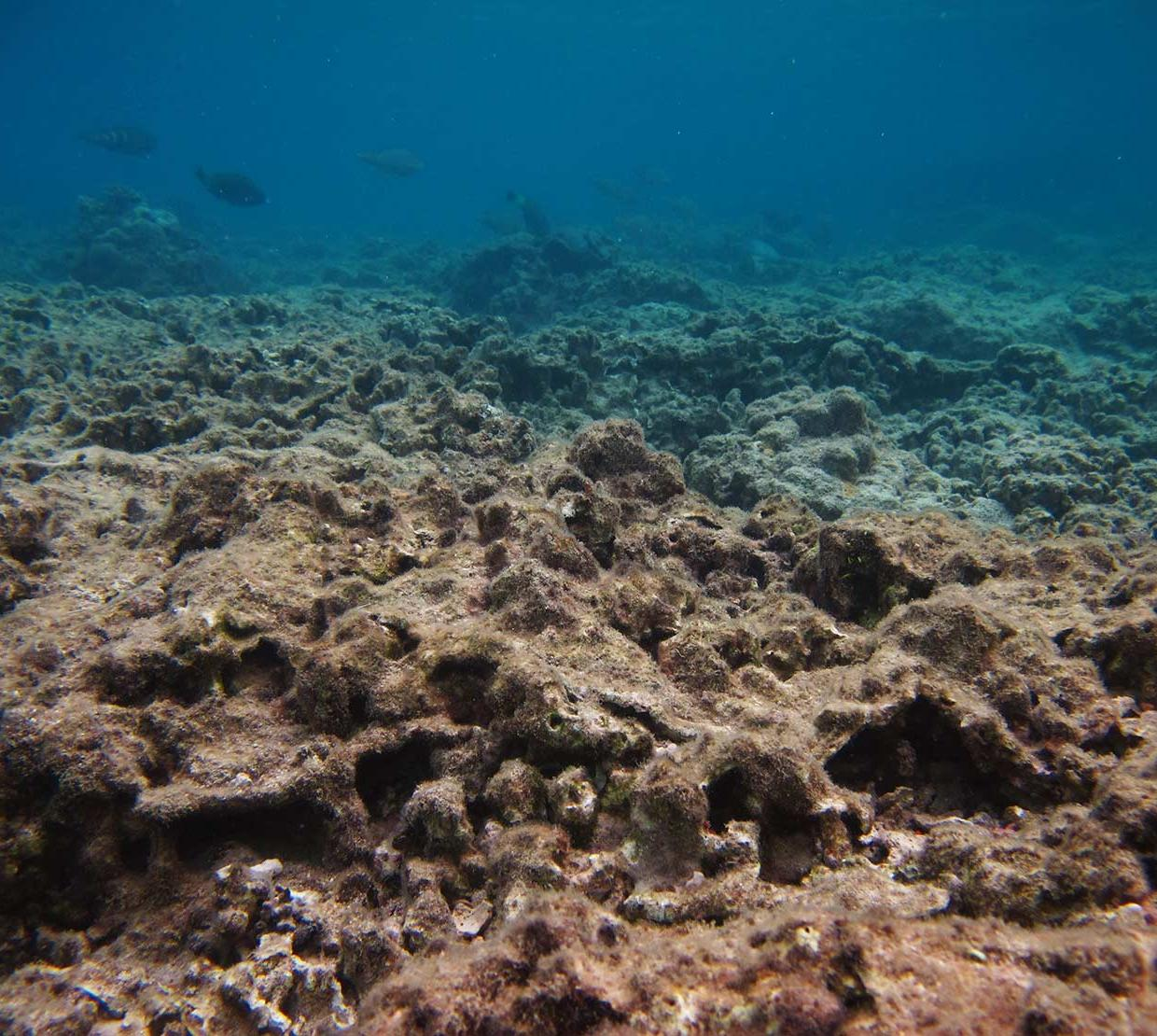 coral at bottom floor of shallow ocean