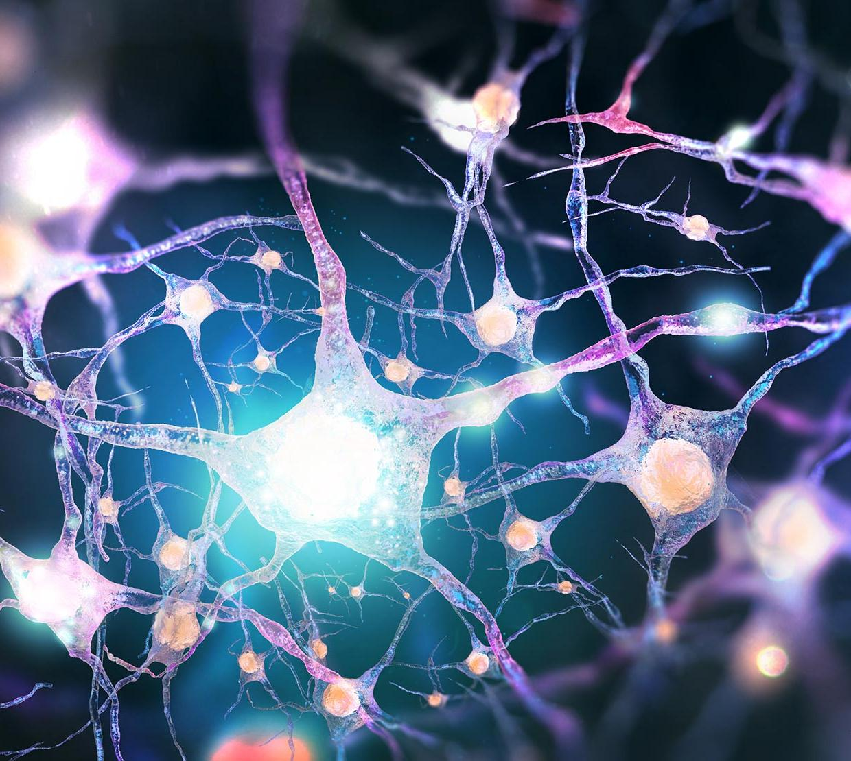 3D animation of nervous system and neurons