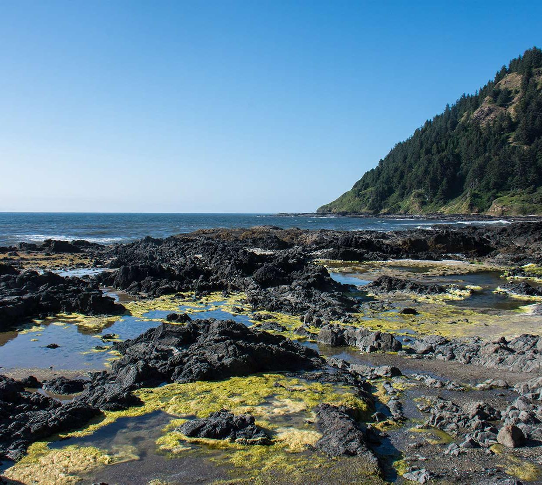 tide pools along ocean shore