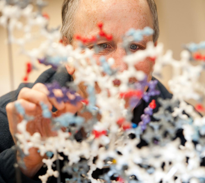 Andy Karplus looking into 3D diagram of molecules