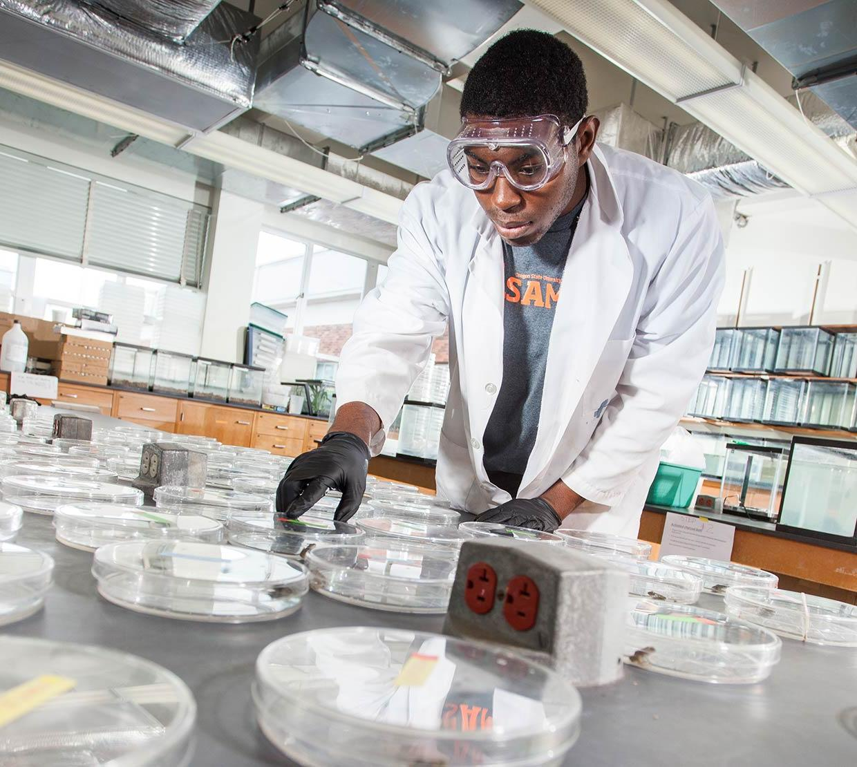 Justin Conner grabbing petri dishes in lab