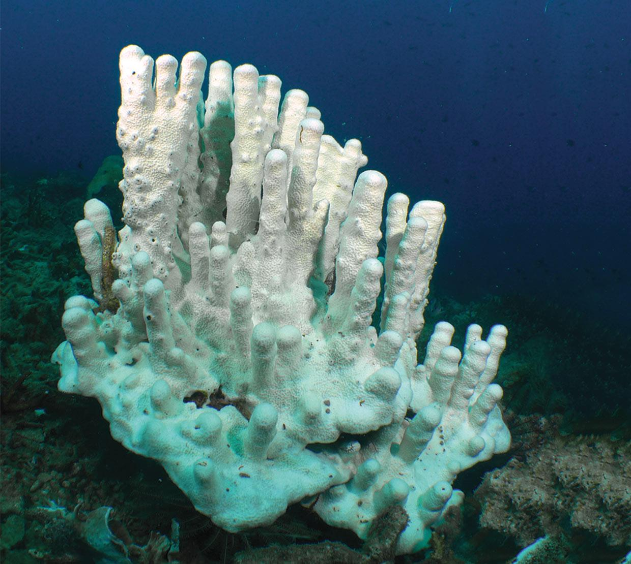 white coral at bottom floor of shallow ocean