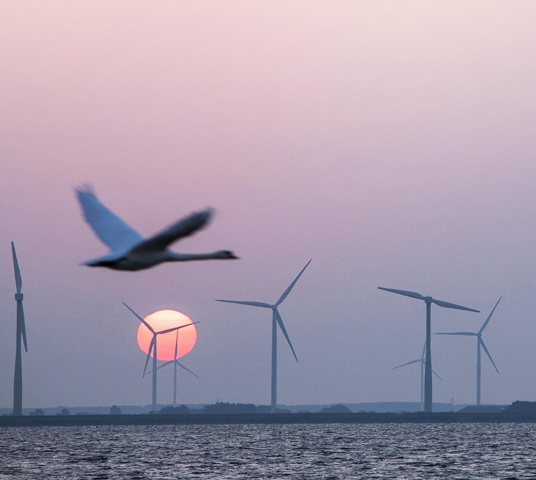 Bird flying next to windmills