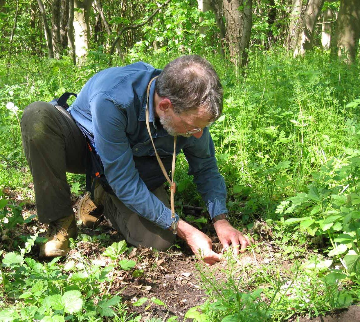 David Maddison diggings through soil in forest