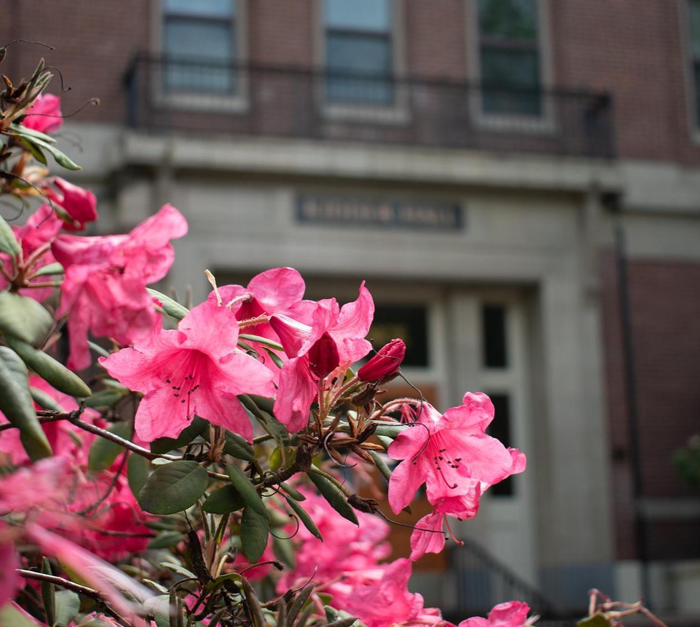 pink flowering bush in front of Kidder Hall northern entrance.