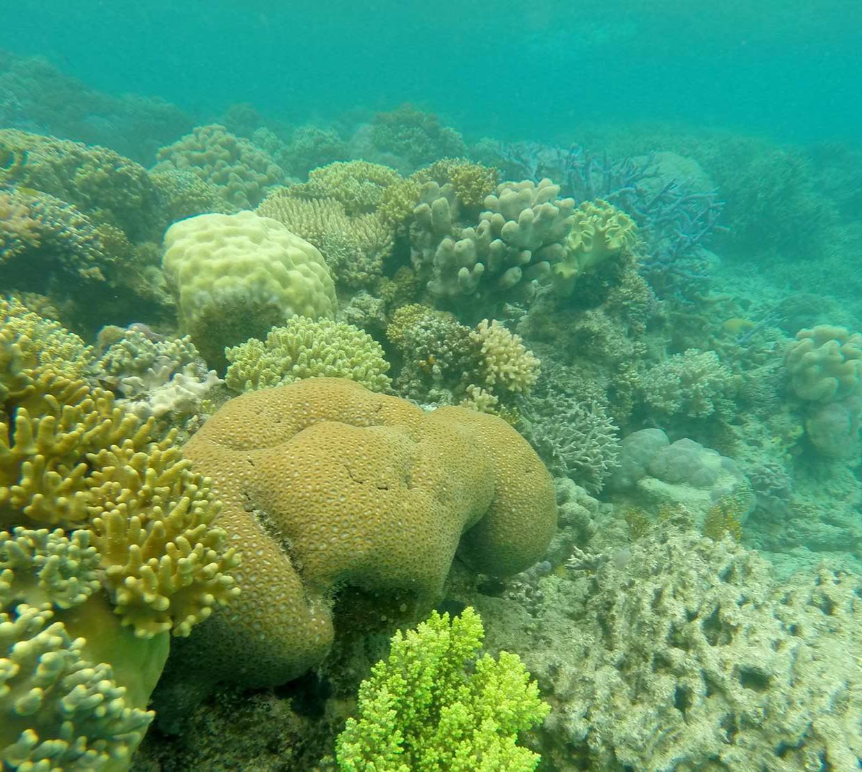 Corals on Lizard Island