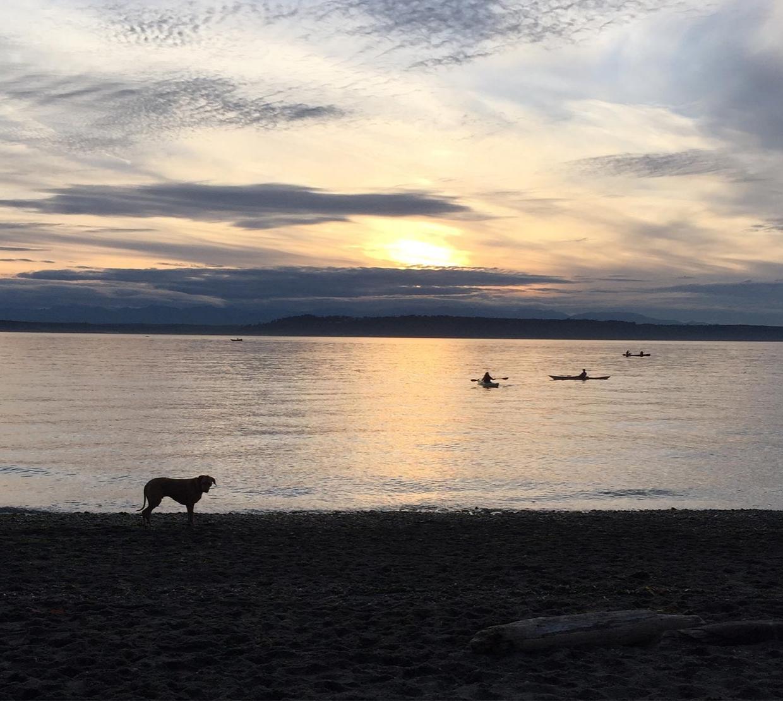 Dog standing at shoreline in Puget Sound at Edmond's Wash.