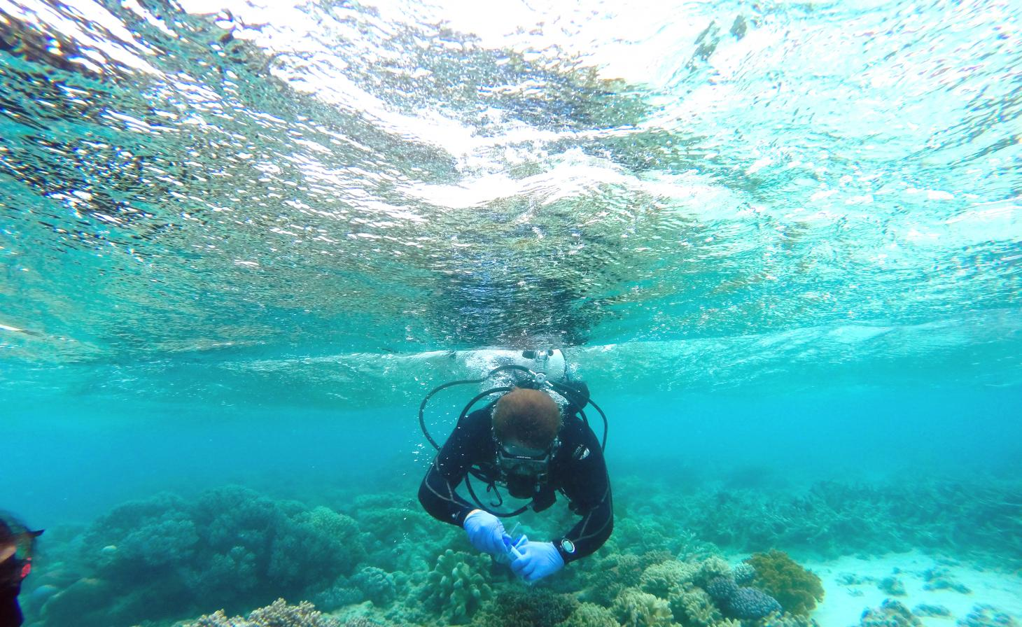 Microbiology student scuba diving for samples