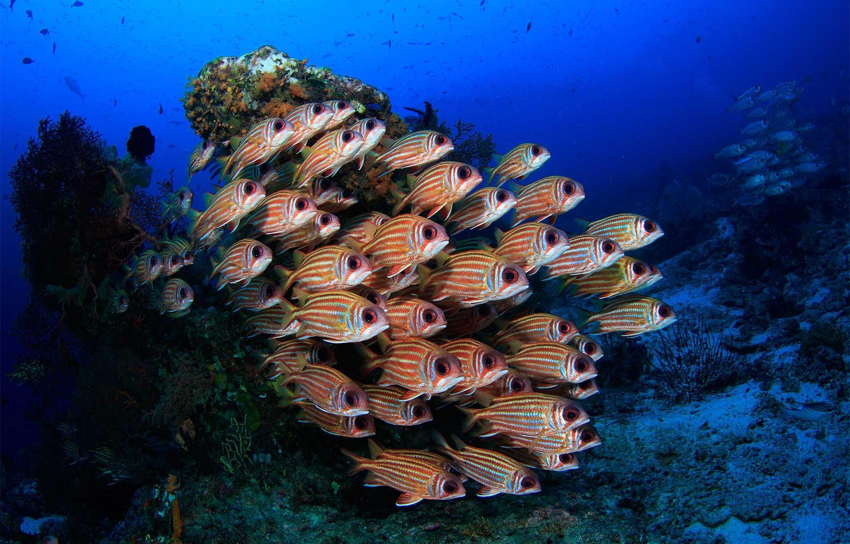 school of fish swimming near ocean floor