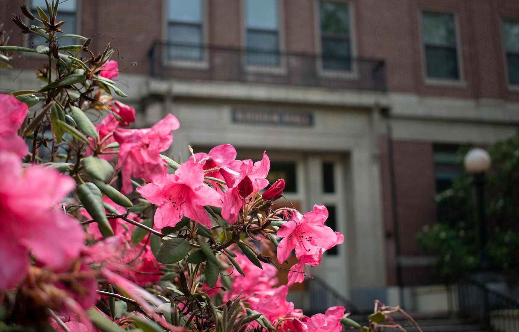 Pink flowers in front of Kidder Hall.