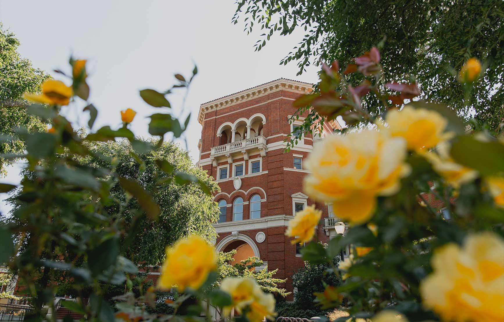 Weatherford Hall peering through yellow rose bush.