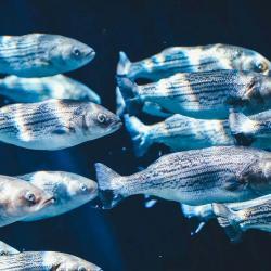 School of fish swimming through dark creek