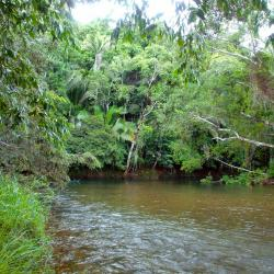 Tropical river in rainforest
