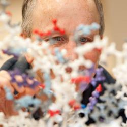 Andy Karplus looking through model of molecules