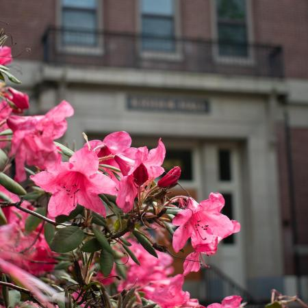 pink flowering bush in front of Kidder Hall northern entrance.