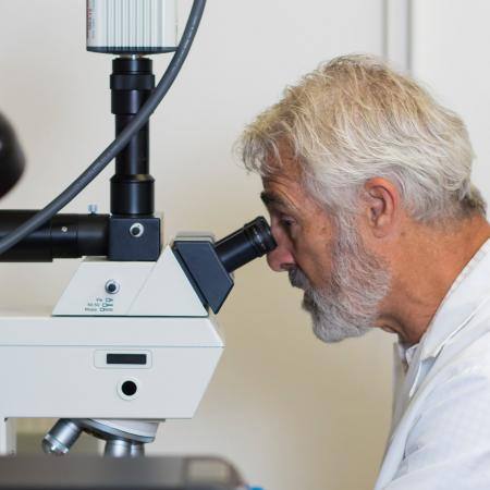 Steve Giovannoni looking into microscope in lab.