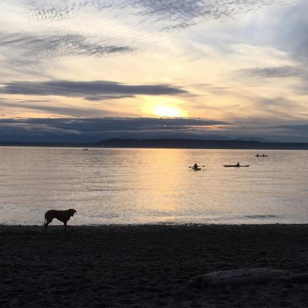 Dog standing at shoreline in Puget Sound at Edmond's Wash.