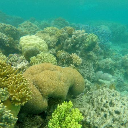Corals along seafloor in Lizard Island.