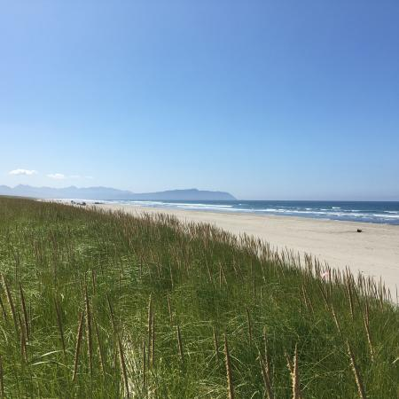 Beachgrass on a dune with a beach below and the ocean beyond