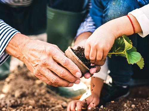 toddler and grandparent gardening with small flower
