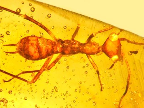 Insect fossilized in yellow amber
