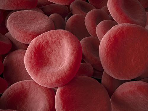 3D model of red blood cells