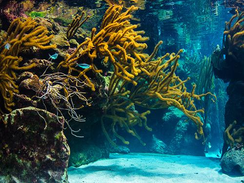 Coral reef sitting on rocks in ocean floor