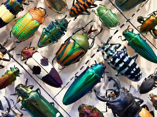 A group of colorful beetles models on white table