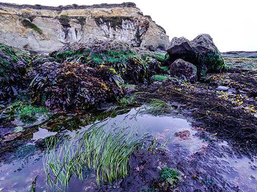 tide pools along Oregon coast