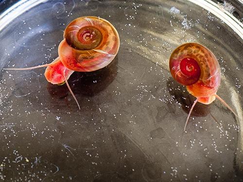 snails slithering under fisheye camera