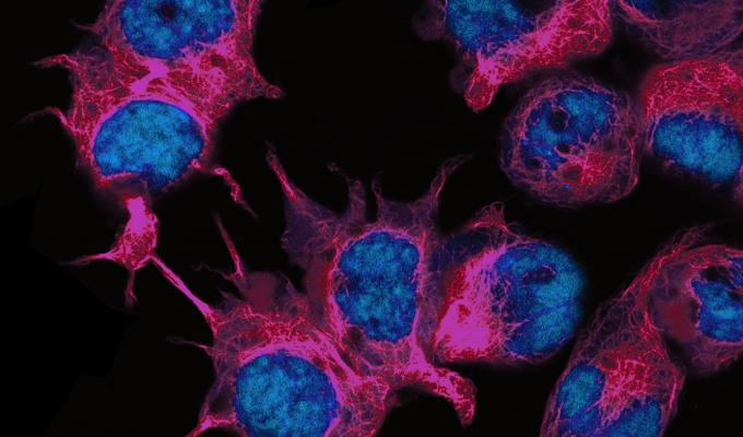 microscopic view of fluorescent cells