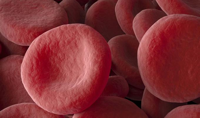 Animation of red blood cells