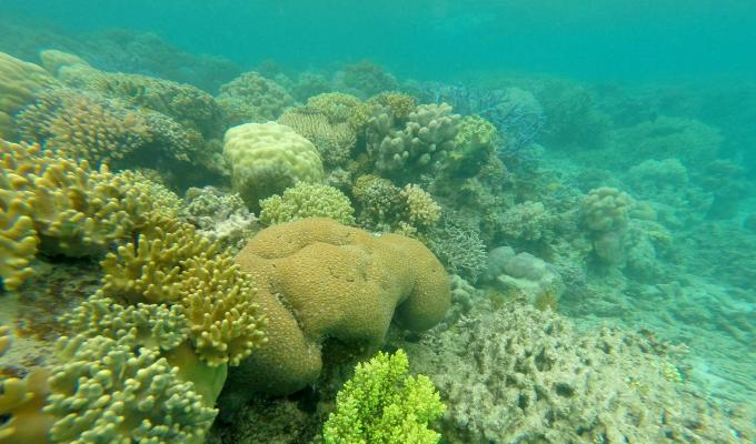Corals along seafloor in Lizard Island.