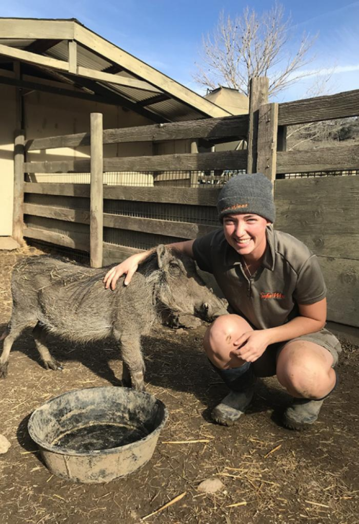 Molly Cordell caring for a warthog