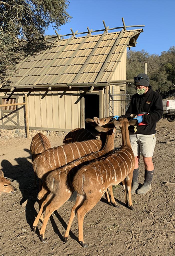 Cordell feeds antelope